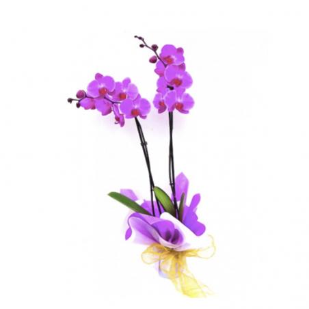 Orquídea Cali
